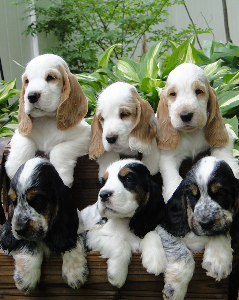 puppiess_new2